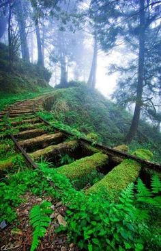 Beautiful and Magical Green Tracks