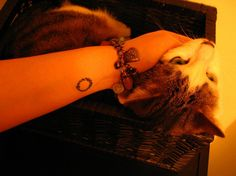 The first tattoo and the first cat.    Ouroboros symbolises constant change and rebirth, and the snake goes in circles meaning we can't escape ourselves. Despite journeys we take and changes that happen to us along the way, we often eventually go back. (hilarious, this was a tattoo mentioned in a series i've just finished! also means our souls are in a constant loop, the only immortal part of the world, always recycling to a new life over and over again. I love it!)