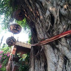 """樹王公  #tree #anping #tainan #taiwan #travel #대만 #타이난 #여행 #안핑 #安平 #台南 #台湾 #旅行"" Photo taken by @ishideo on Instagram, pinned via the InstaPin iOS App! http://www.instapinapp.com (06/10/2015)"
