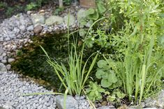 wildlife to your garden pond Attract wildlife to a small pond.Attract wildlife to a small pond. Pond Landscaping, Backyard Water Feature, Wildlife Garden Design, Water Features In The Garden, Small Gardens, Wildlife Gardening, Fish Pond Gardens, Ponds For Small Gardens, Bog Garden