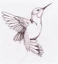 hummingbird sketch