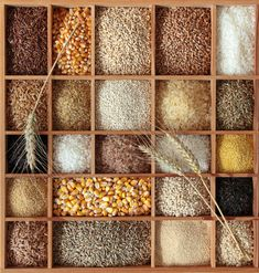 "Learn ways to painlessly transition to whole grains and leave those ""whites"" behind! - Perry's Plate series ""Staying Whole in a Processed World: Whole Grains"""