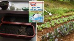 Garden, Plants, Outdoor, Chemistry, Compost, Outdoors, Garten, Lawn And Garden, Gardens