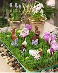 How to grow wheat grass tutorial and easter decorations - the muscari pots look lovely too