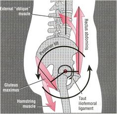 "Note from TeamMona: ""What your pelvis may be telling you"" is a a clear explanation of neutral, posterior tilt, and anterior tilt pelvic positions. :-) what to do for lower back pain Fitness Workouts, Cardio Gym, Psoas Release, Scoliosis Exercises, Pelvic Tilt, Pelvic Floor, Thigh Muscles, Anatomy And Physiology, Pelvis Anatomy"