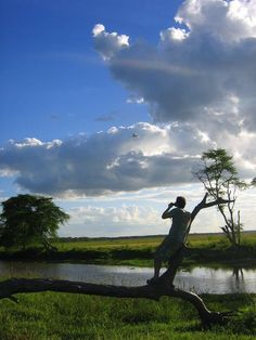 Roald,looking to see any signs of elephants here in this part of the Gorongosa, Mozambique's largest national park.........