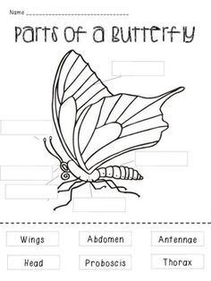 Activity+1+-+Students+cut+out+the+parts+of+a+butterfly+and+paste+in+the+appropriate+space  Activity+2+-+Students+match+the+part+of+a+butterfly+with+its+definition  Check+out+my+Butterfly+Life+Cycle+flipbook! http://www.teacherspayteachers.com/Product/Butterfly-Life-Cycle-1196475  Check+out+my+Butterfly+vs+Moth+mini+lesson! http://www.teacherspayteachers.com/Product/Butterfly-vs-Moth-1196583