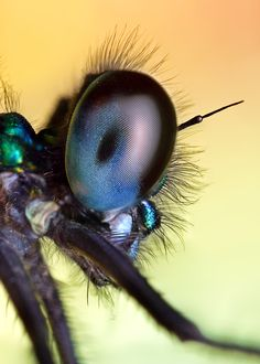 incredible shot of a fly's eye
