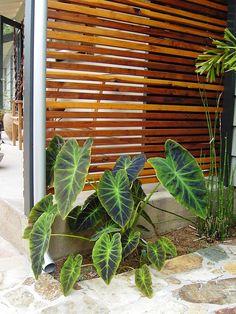 Wood outdoor garden screen
