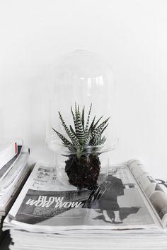 green house glass / j. levau shop
