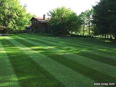 lawn patterns striped grass