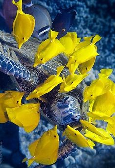 Image bank - Two yellow tropical fish in an aquarium Blue Reef coral sea water Underwater Creatures, Underwater Life, Ocean Creatures, Life Under The Sea, Beneath The Sea, Salt Water Fish, Water Animals, Turtle Love, Beautiful Ocean