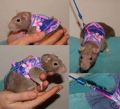 Rat Harness/Jacket, these actually fit Rats and Ferrets! Very cool!