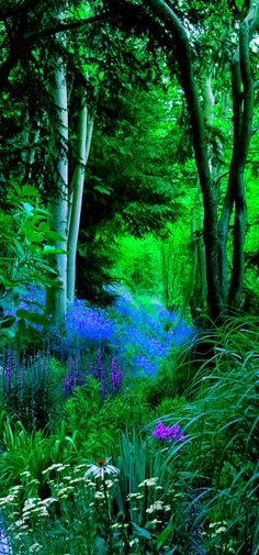 I love when I come across places like this in the woods... they seem magical.