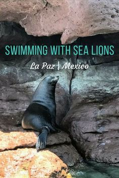 Take an Isla Espiritu Santo tour from La Paz to go swimming with sea lions in Mexico. Tips on which tour, what you'll see and where to stay. via @indianajoblogs
