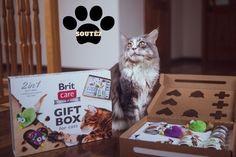 Soutěž s Brit – Zn.: Hledá se zábavná lahůdka #brit #krmivo #prokocky #forcat #cats #food #premium #soutez #womanandstylecz Malm, Cinema, Box, Gifts, Movies, Snare Drum, Presents, Favors, Movie Theater