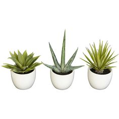 Agave Cactus Trio ($50) ❤ liked on Polyvore featuring home, home decor, floral decor, fillers, plants, other and cactus home decor