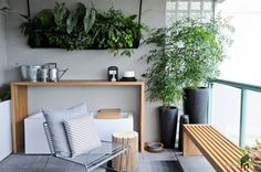 An Interesting Indoor Potted Plant With Black Vase And Hanging Pot Decor For Simply Balcony With Wooden Desk And Bench Also Stainless Chairs Nice Indoor Potted Trees as Interior Decoration in Modern House with Unique Design Element Interior Design