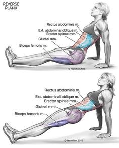 Okay, today you're going to learn how to reverse plank. One of the first places you gain weight is typically around your belly. It's also one of the hardest places to lose fat. But going to the gym… http://weightlosssucesss.pw/the-5-commandments-of-smart-dieting/
