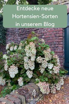 Entdecke verschiedenen Hortensie-Arten, für jeden Standort und Geschmack. Outdoor Structures, Climber Plants, Garten