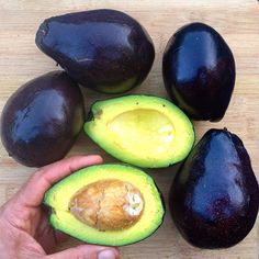 Cold Hardy Avocados: Guide to Cultivation and Varieties – Florida Fruit Geek Avocado Varieties, Avocado Types, Buy Plants, Garden Plants, Harvest Time, Fruit Art, In The Flesh, Fast Growing, Fruit Trees