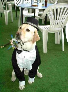 45 Photos Of Ring Bearer Dogs – | VH1 Celebrity I want my dog to be my ring bearer someday!