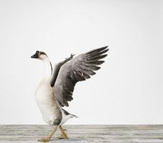 If you're a bird, then I'm a bird... Goose Tattoo!!! LOLOLOLOLOLOL!!!!! We gotta do this! @Alexis Germany