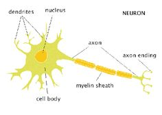 This slideshow gives a lot of information of neurons and the nervous what are neurons quora ccuart Choice Image