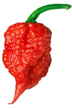 The hottest chili pepper in the world is currently the Carolina Reaper, topping 2 Million Scoville Heat Units. Learn more about the world's hottest chili peppers. Carolina Reaper Hot Sauce Recipe, Coconut Oil Weight Loss, Hot Sauce Recipes, Tuna Recipes, Hot Pepper Sauce, Pepper Plants, Hottest Chili Pepper, Peppers And Onions, Dried Peppers