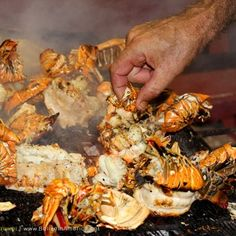 Placencia Lobster Fest | Belize in America - All things Belize!