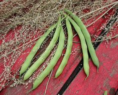 The Kentucky Dreamer is an improved Kentucky Wonder Bush bean. This variety was developed to produce a high concentrated pod set. This upright plant that grows to over with medium green pods, flat, long with white seeds.
