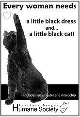 Little black cat needs help  www.sohumane.org