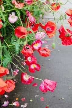 <3 poppies