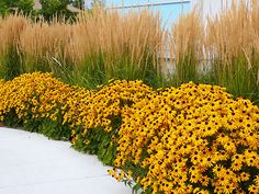 Altijd zonnig met geel in de tuin Roomed   roomed.nl