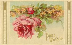 Best Wishes Rose Free post card Clipart/Photo Images. Collection of photos, Images, clip art & vintage items to freely use in arts/craft projects including art/crafts for resale. Please don't use in image collections for resale in any digital format including selling cds of images or digital collage sheets. Link to this page from your blogs, websites etc. Please contact me if you're wanting permission to use/display images on your websites and/or anywhere else on internet. Thank-you Kim…