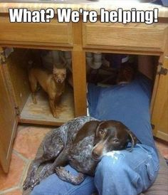 """I totally understand this. My dog recently """"helped me"""" grout my shower. Have to be where the people are!!"""