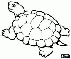 χελωνα για ζωγραφικη - Google Search