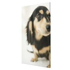 >>>Cheap Price Guarantee          Dog 2 canvas print           Dog 2 canvas print today price drop and special promotion. Get The best buyDiscount Deals          Dog 2 canvas print Review on the This website by click the button below...Cleck Hot Deals >>> http://www.zazzle.com/dog_2_canvas_print-192321902199749802?rf=238627982471231924&zbar=1&tc=terrest