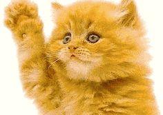 Gatos bellos...
