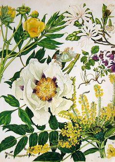 Beautiful botanical flower plate.