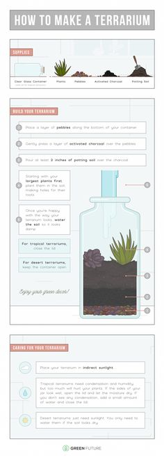 The Ultimate Guide To Creating A DIY Terrarium In Your Apartment | Decorating With Plants | Great Infographic From Green Future