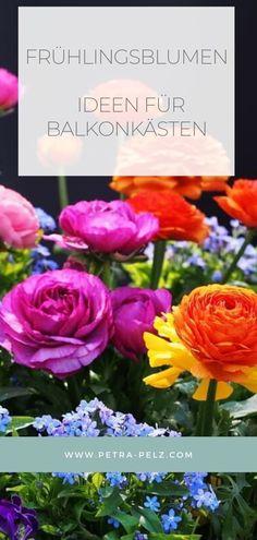 Von der zarten Primel bis zur kräftig leuchtenden Ranunkel – mit farbenfrohen Frühlingsarrangements zeigst Du dem Winter die kalte Schulter. Bringe Farbe in den Garten und auf deinen Balkon. Blumenkästen bepflanzen | Blumenkästen Winter | bepflanzen Sommer | Blumenkästen Frühling | Blumenkästen bauen | Blumenkästen Balkon| Balkonpflanzen Ideen | Frühling Garten Ideen | Frühling Garten Blumen | Blumentöpfe bepflanzen modern| Gartenarbeiten Frühling  | Frühling Garten Blumen   #Petra Pelz Sweater Nails, Nails At Home, Create, Rose, Flowers, Plants, Diy, Modern, Balcony Ideas