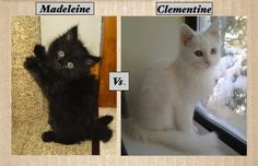 Click here to vote for the prettiest kitty: http://www.womansday.com/life/pet-care/cutest-cats-meow-madness-round-2