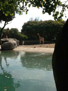 Zoológico de Chapultepec en Miguel Hidalgo, Distrito Federal
