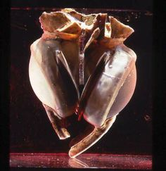 Nearly 42 yrs ago, the 1st artificial heart was implanted in a history-making operation at St. Luke's Hospital in Houston.  Dr. Denton Cooley performed the op, and the device, developed by Dr. Domingo Liotta, was implanted in a 47-yr-old patient with severe heart failure.  The patient lived for nearly 3 days with the artificial heart until a human heart was available for transplant.  This 1st plastic heart is now among the 137 million artifacts in the collection of the Smithsonian…