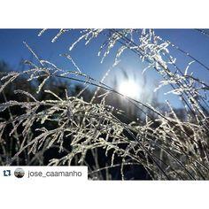 #BuenosDías hoy es San Viernes y el sol aparece entre las hojas heladas en esta foto de @jose_caamanho #SienteGalicia   #sol #xiada #xeo #amencer #naturaleza_galicia #galicia #galiza #galiciamola #galiciaglobal #galifornia #galiciagrafias #igalicia #loves_galicia #ig_galicia #igersgalicia #descubriendoigers #descobregalicia #somosgalegos #coloresgallegos #rinconesgallegos #fotogalicia