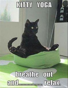 Funny Cats - Raccolte - Google+