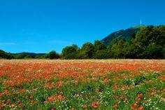 Vue du département du Puy-de-Dôme - www.auvergne.fr Vineyard, Explore, Mountains, Architecture, World, Travel, Outdoor, Beautiful, Xmas