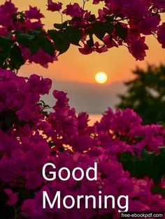 Good Morning Beautiful Pictures, Latest Good Morning Images, Good Morning Images Flowers, Good Morning Inspiration, Good Morning Images Download, Good Morning Picture, Good Morning Tuesday, Good Morning Happy, Good Morning Greetings