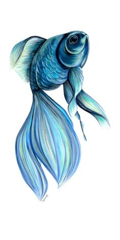 20 Types of Goldfish for Aquarium (Oranda, Shubunkin, Bubble Eye, Etc) Blue Drawings, Fish Drawings, Colorful Drawings, Art Drawings Sketches, Animal Drawings, Fish Pencil Drawing, Color Pencil Art, Fish Art, Colored Pencil Drawings